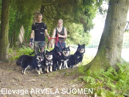 Arvela Suomen élevage De Chien Finnois De Laponie